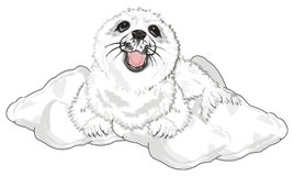 Cute seal lying. White baby seal lying in the snow stock illustration