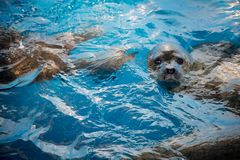 Cute seal royalty free stock photography