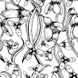 Cute seamless pattern with flowers snowdrops. Hand drawn vector. Black and white floral seamless pattern with flowers snowdrops, buttons, leaves and white vector illustration