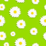Cute seamless pattern with white chamomiles flowers on a grass or green background.  Royalty Free Stock Images