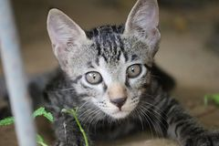 Cute serious kitten royalty free stock photos