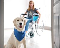 Cute service dog and blurred girl in wheelchair. View through door stock photography