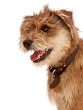Cute shaggy dog with happy expression. Stock Photography