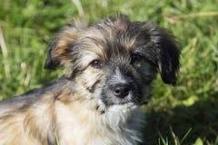 Cute shaggy puppy Stock Photo