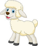 Cute sheep cartoon Stock Images