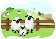 Cute sheep family on pasture Royalty Free Stock Photo
