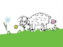 Cute sheep Stock Photography