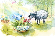 Cute Sheep Smelling Garden Flowers Watercolor Summer Garden Illustration Hand Painted Royalty Free Stock Photos