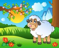 Cute sheep on spring meadow Stock Photo