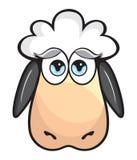 Cute Sheep Royalty Free Stock Photo