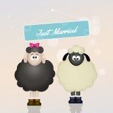 Cute sheeps spouses. Illustration of cute sheeps spouses Stock Photos