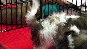 Cute shih tzu pups playing inside a cage on display for sale Royalty Free Stock Photos