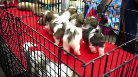 Cute shih tzu pups playing inside a cage on display for sale Stock Photography