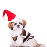 Cute shih tzu santa Stock Image