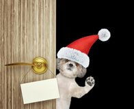 Cute shitzu dog in red christmas santa claus hat looking out the door entrance at home with empty card. Isolated on stock images