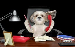 Cute shitzu dog sitting on leather chair with telephone and pencil. Isolated on black Stock Photo