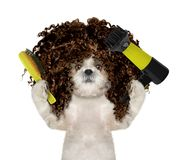 Cute shitzu dog in spa grooming salon. Isolated on white royalty free stock photo