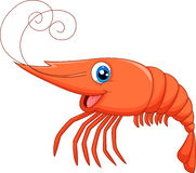 Cute shrimp cartoon Stock Image