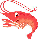 Cute shrimp cartoon Stock Photo