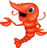 Cute shrimp cartoon presenting Stock Images