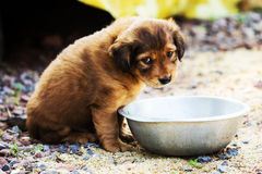 Cute shy puppy Stock Photography