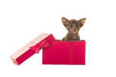 Cute siamese baby cat in a pink gift box Stock Images