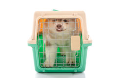 Cute siberian husky puppy in travel box Royalty Free Stock Images