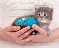 Cute siberian kitten Stock Photography