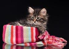 Cute siberian kitten Stock Photos