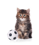 Cute siberian kitten Royalty Free Stock Images