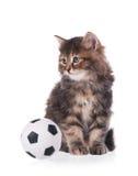 Cute siberian kitten Royalty Free Stock Photos