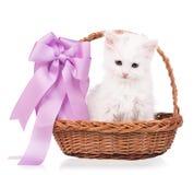 Cute siberian kitten Stock Images