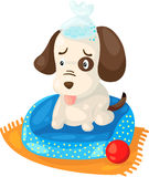 Cute sick dog Royalty Free Stock Photo