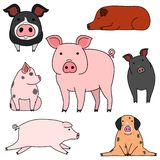 Cute and simple pig doodle drawing set. Cute pig doodle drawing set, making various poses stock illustration