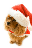 Cute sitting dog in Santa dress Royalty Free Stock Images