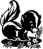 Cute Skunk Royalty Free Stock Photography