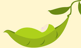 Cute sleeping baby pea Stock Images