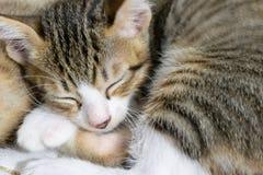 Cute Sleeping Black Striped Kitten Image royalty free stock images