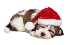 Cute sleeping Havanese puppy dog is dreaming about Christmas. And wearing a Santa hat. Isolated on a white background Royalty Free Stock Image