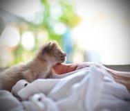 Cute sleeping kitten cat Stock Photos