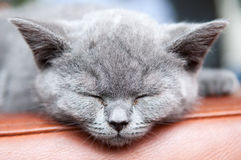 Cute sleeping kitten resting and relaxing, Feline animal. Cute sleeping kitten resting and relaxing, Feline cat animal Stock Images