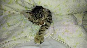 Sleeping little cat. Cute sleeping kitten Stock Photography