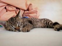 Cute sleeping kitty royalty free stock photography