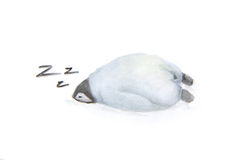 Cute sleeping penguin. Stock Images