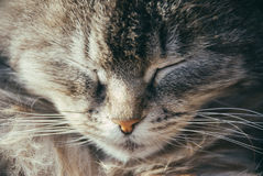 Cute sleepy brown kitty. Film photo of cute sleepy brown kitty Royalty Free Stock Photos