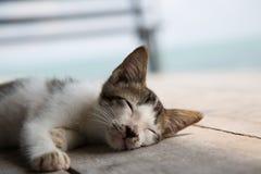 Cute sleepy kitten. Stock Image
