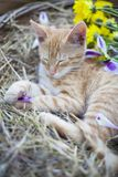 Little cat sleepingin wicker basket stock images