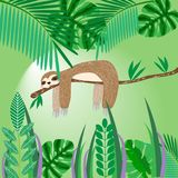 Cute sloth sleeping on a tree in the jungle, baby card vector il Royalty Free Stock Photo