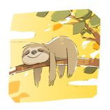 Cute Sloth Taking a Nap stock photos