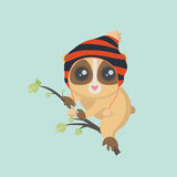 Cute slow loris Stock Images